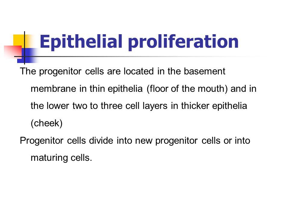 Epithelial proliferation