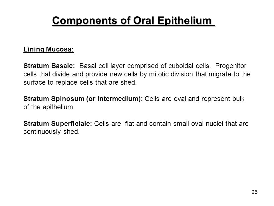 Components of Oral Epithelium