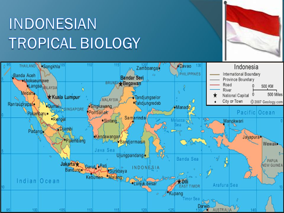 INDONESIAN tropical biology