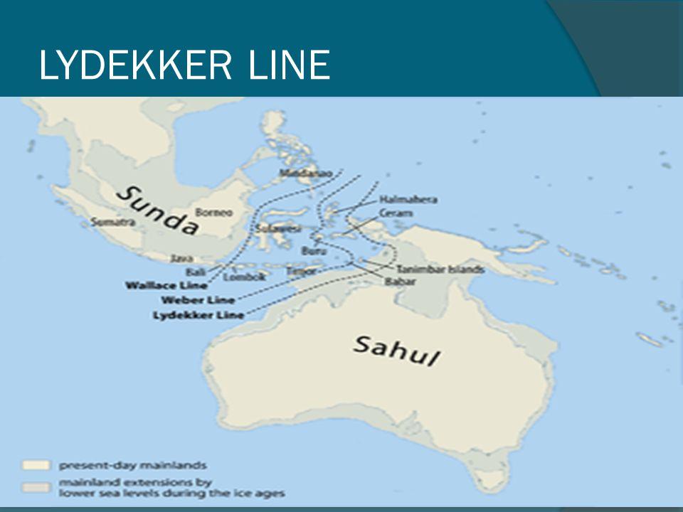 LYDEKKER LINE