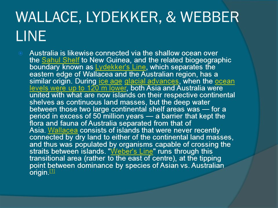 WALLACE, LYDEKKER, & WEBBER LINE