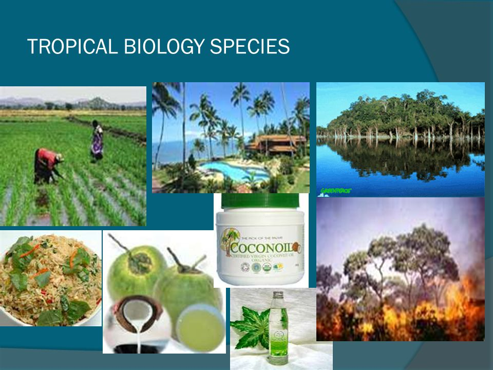 TROPICAL BIOLOGY SPECIES