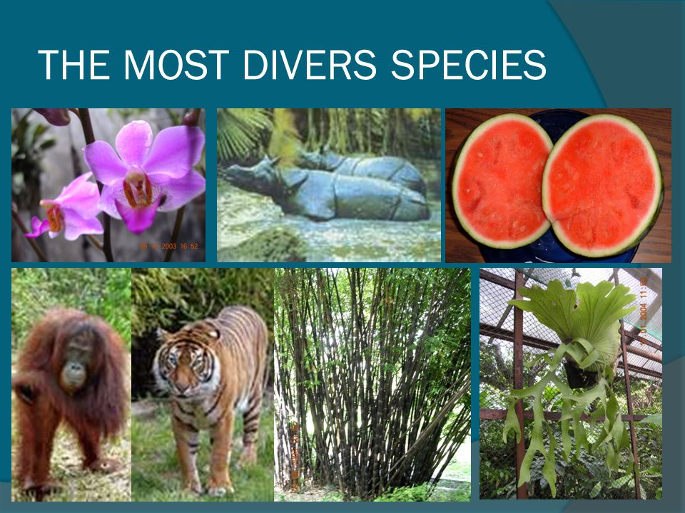 THE MOST DIVERS SPECIES