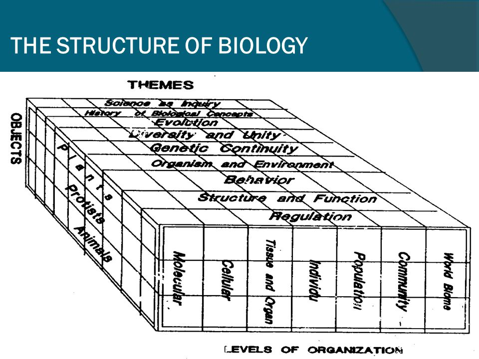 THE STRUCTURE OF BIOLOGY