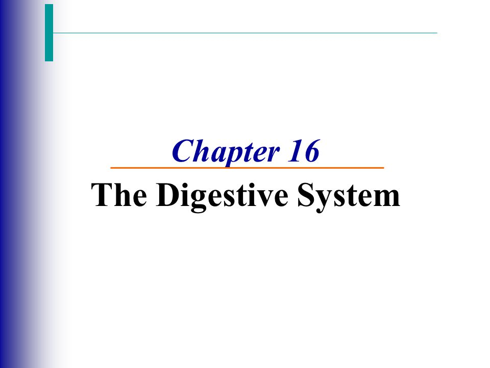 Chapter 16 The Digestive System