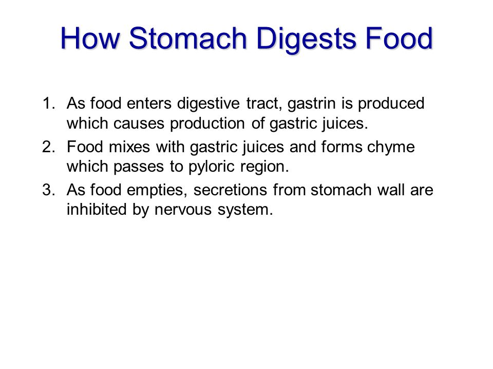 How Stomach Digests Food