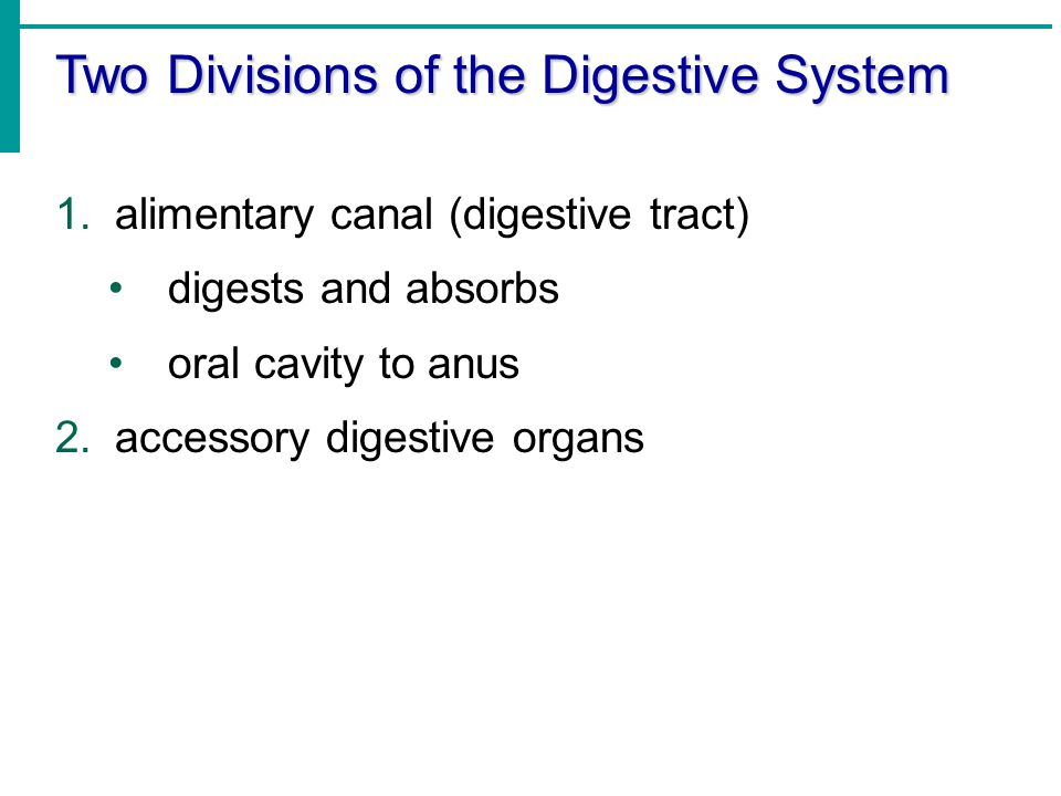 Two Divisions of the Digestive System