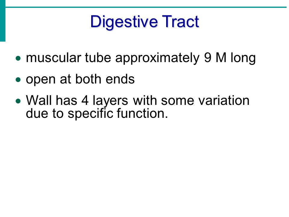 Digestive Tract muscular tube approximately 9 M long open at both ends