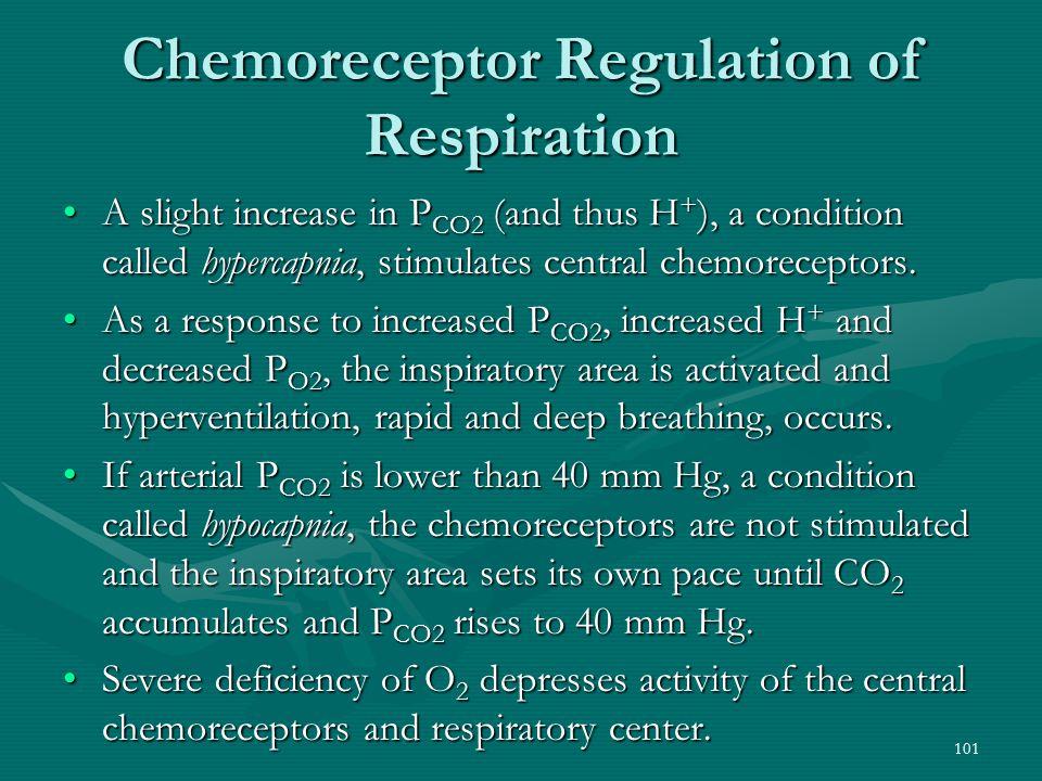 Chemoreceptor Regulation of Respiration