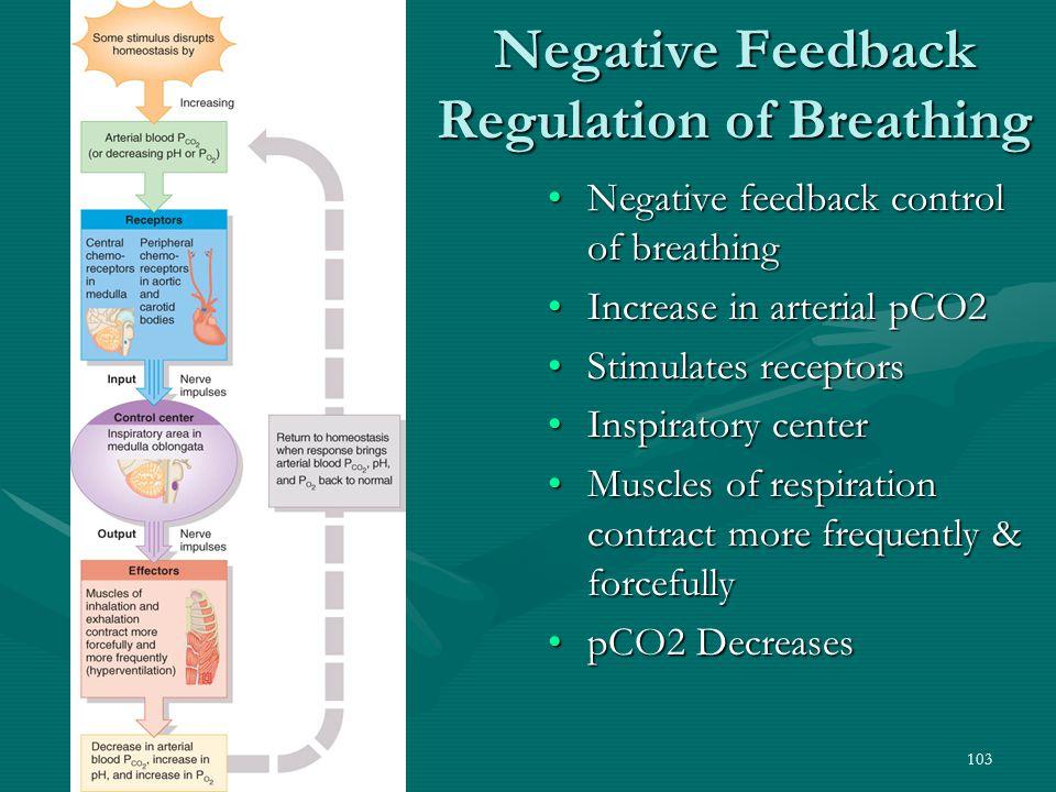 Negative Feedback Regulation of Breathing