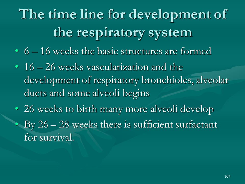 The time line for development of the respiratory system