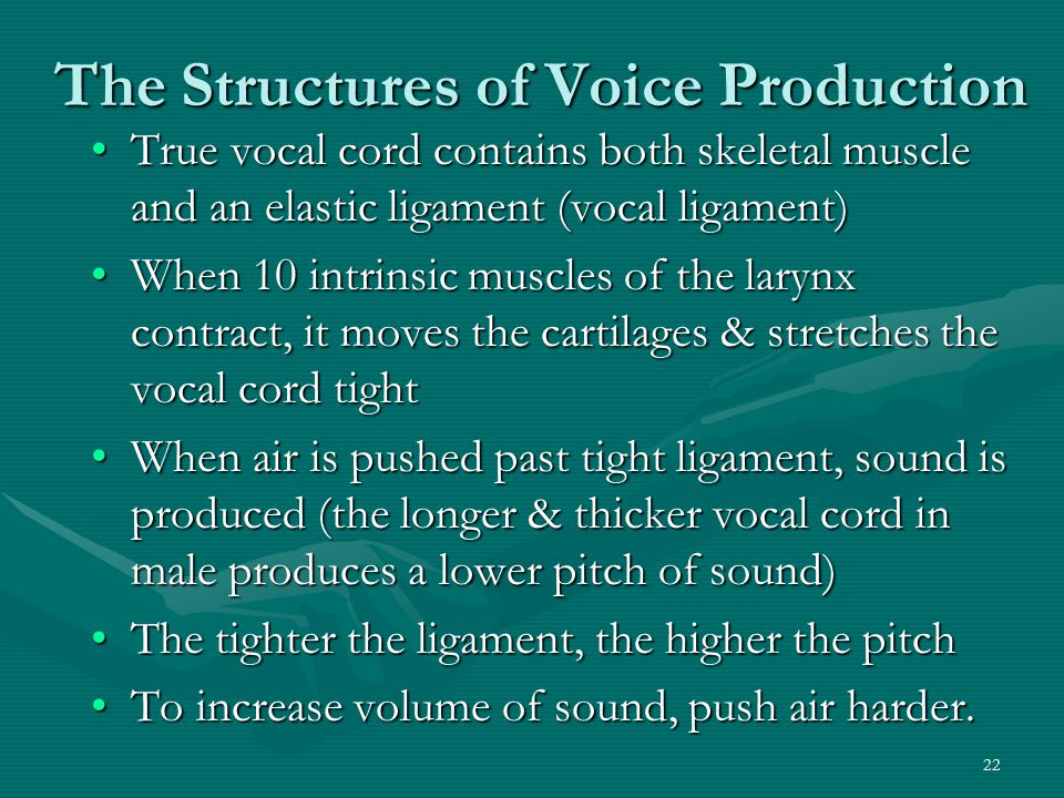 The Structures of Voice Production