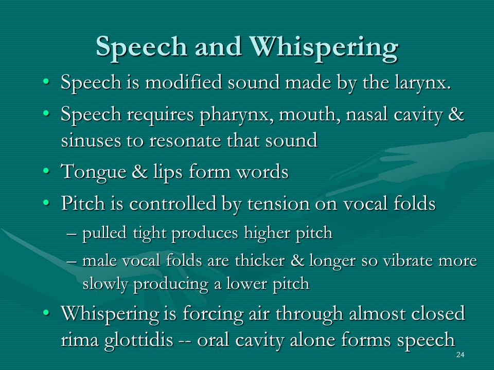 Speech and Whispering Speech is modified sound made by the larynx.