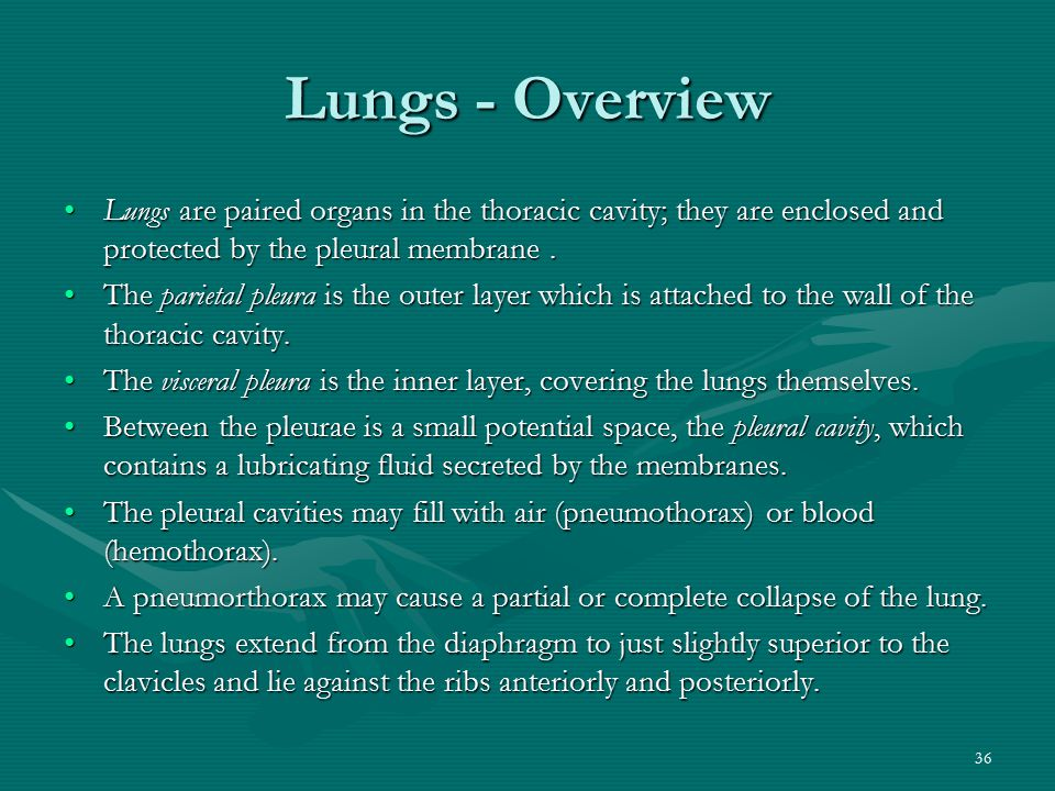 Lungs - Overview Lungs are paired organs in the thoracic cavity; they are enclosed and protected by the pleural membrane .