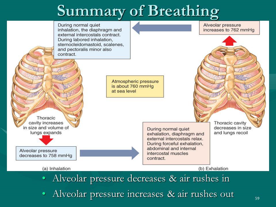 Summary of Breathing Alveolar pressure decreases & air rushes in