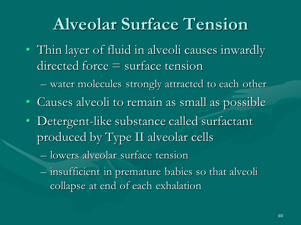Alveolar Surface Tension