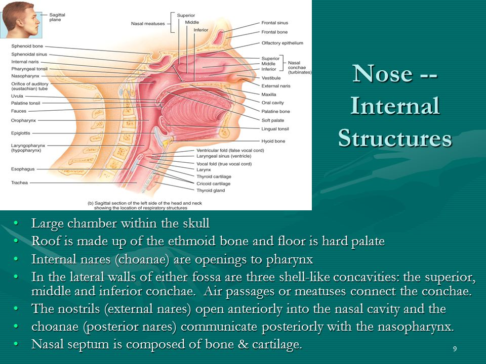 Nose -- Internal Structures