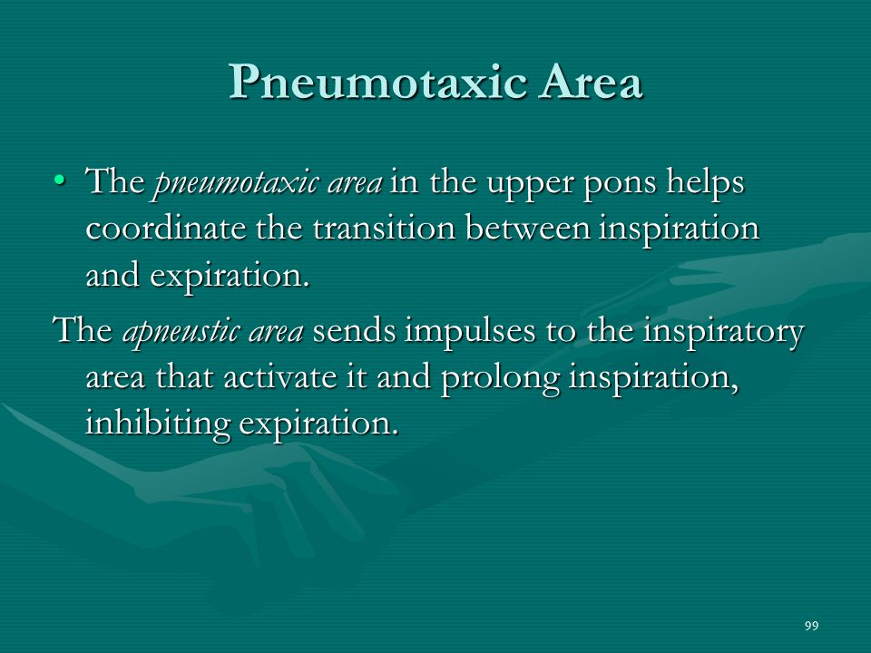 Pneumotaxic Area The pneumotaxic area in the upper pons helps coordinate the transition between inspiration and expiration.
