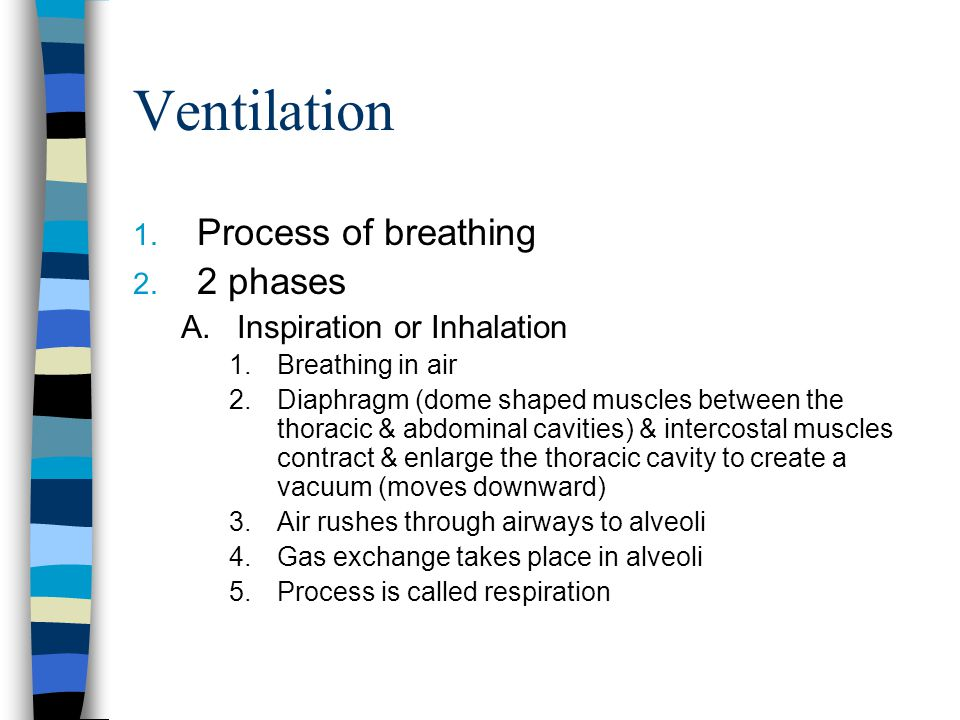 Ventilation Process of breathing 2 phases Inspiration or Inhalation