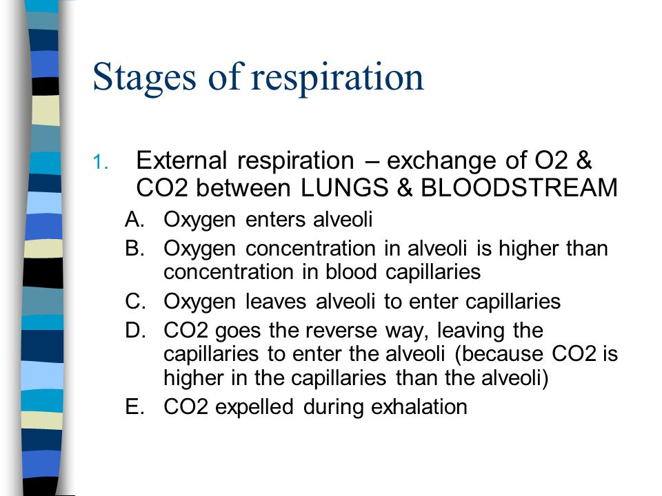 Stages of respiration External respiration – exchange of O2 & CO2 between LUNGS & BLOODSTREAM. Oxygen enters alveoli.