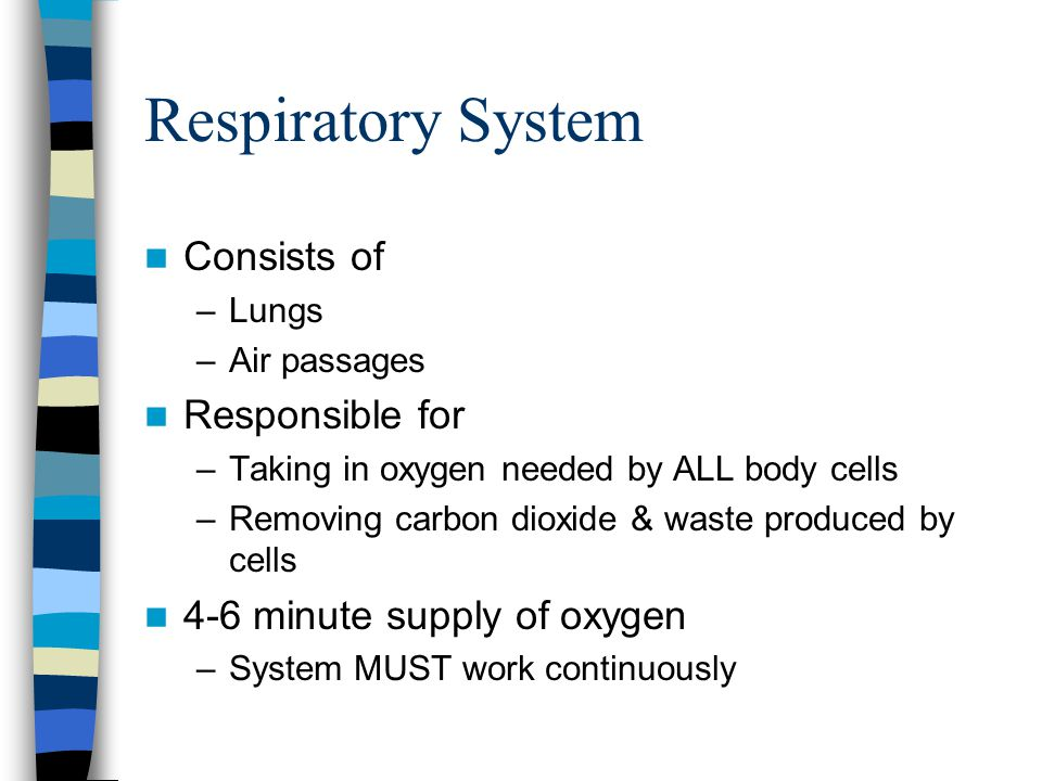 Respiratory System Consists of Responsible for