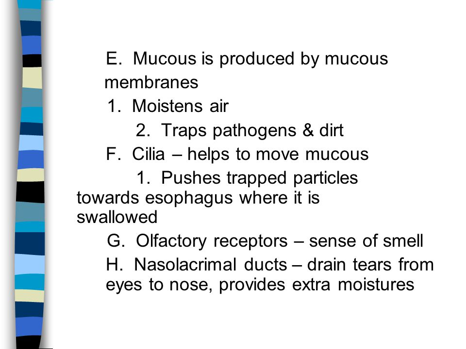 E. Mucous is produced by mucous