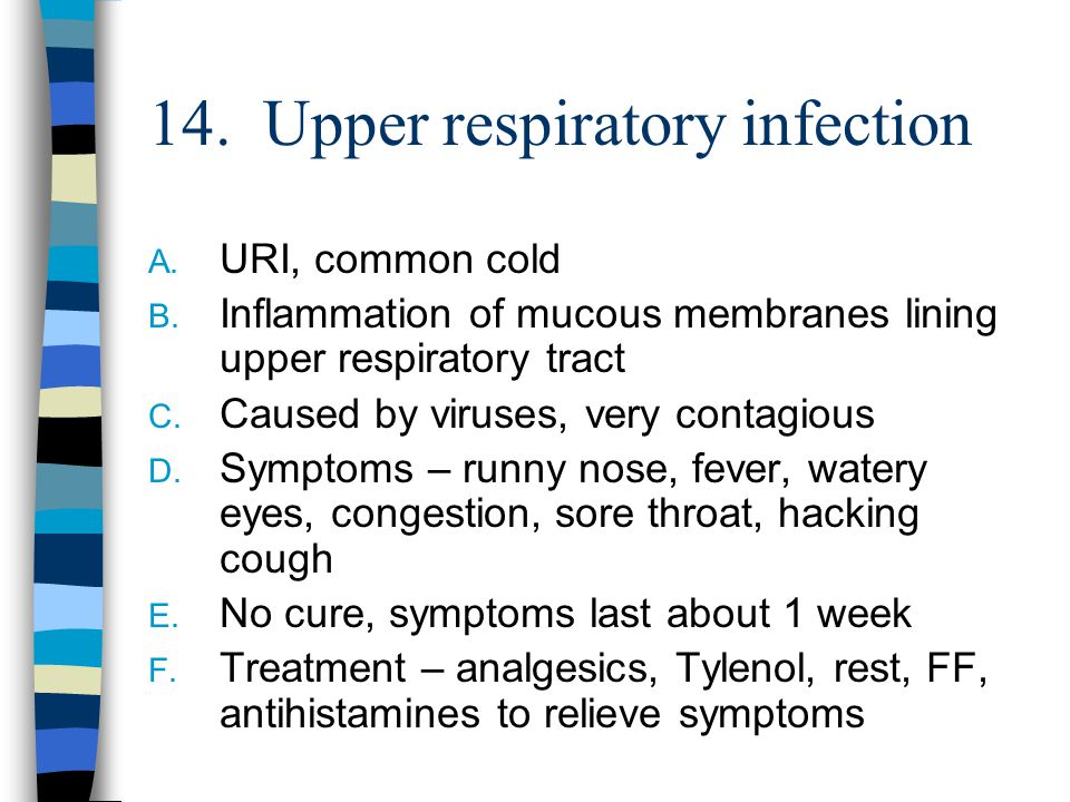 Health Occupations Respiratory System Ppt Video Online