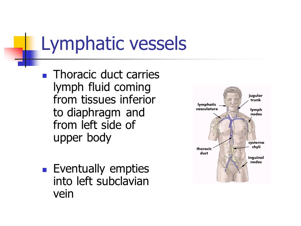 Lymphatic vessels Thoracic duct carries lymph fluid coming from tissues inferior to diaphragm and from left side of upper body.