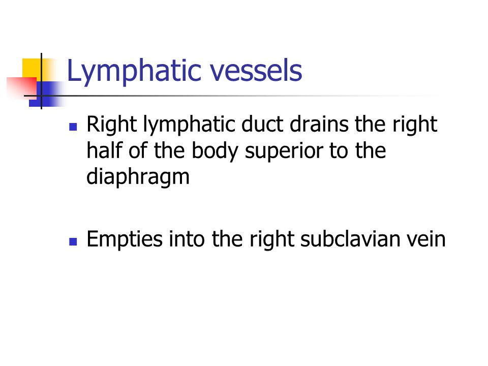 Lymphatic vessels Right lymphatic duct drains the right half of the body superior to the diaphragm.