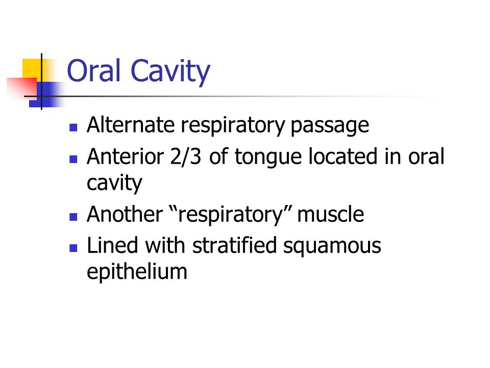 Oral Cavity Alternate respiratory passage