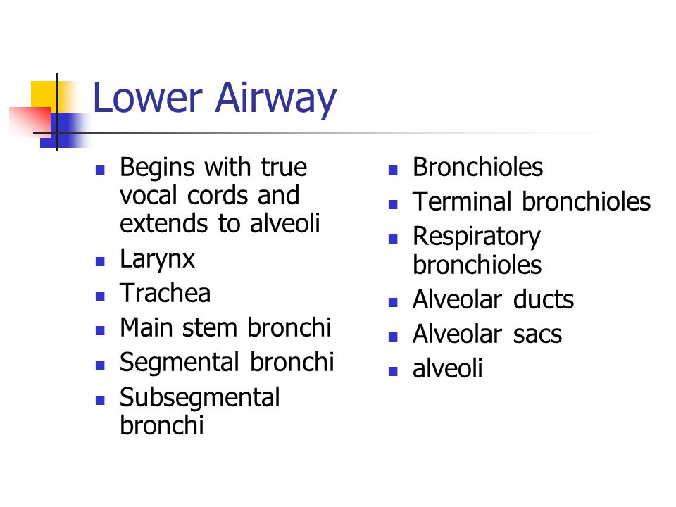 Lower Airway Begins with true vocal cords and extends to alveoli