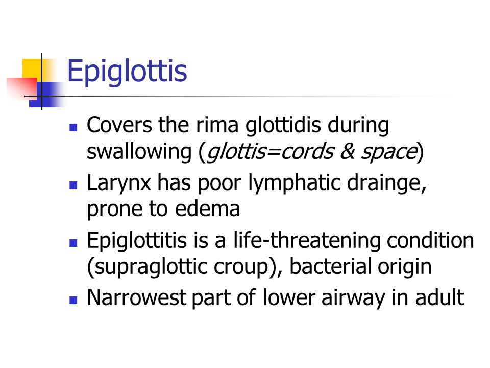 Epiglottis Covers the rima glottidis during swallowing (glottis=cords & space) Larynx has poor lymphatic drainge, prone to edema.