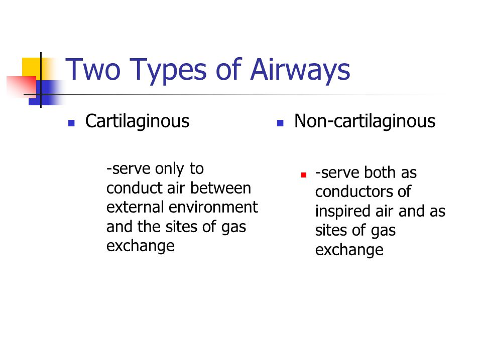 Two Types of Airways Cartilaginous Non-cartilaginous