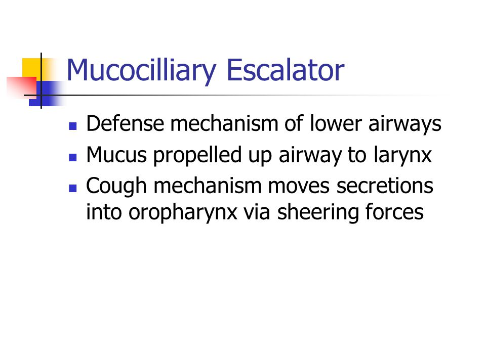 Mucocilliary Escalator