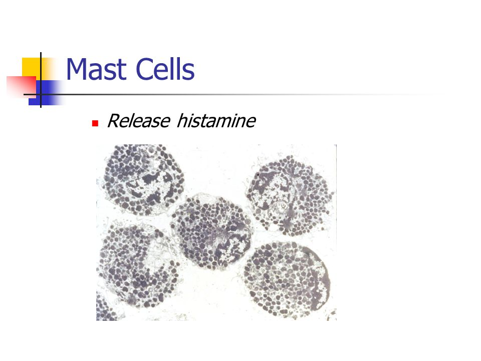 Mast Cells Release histamine