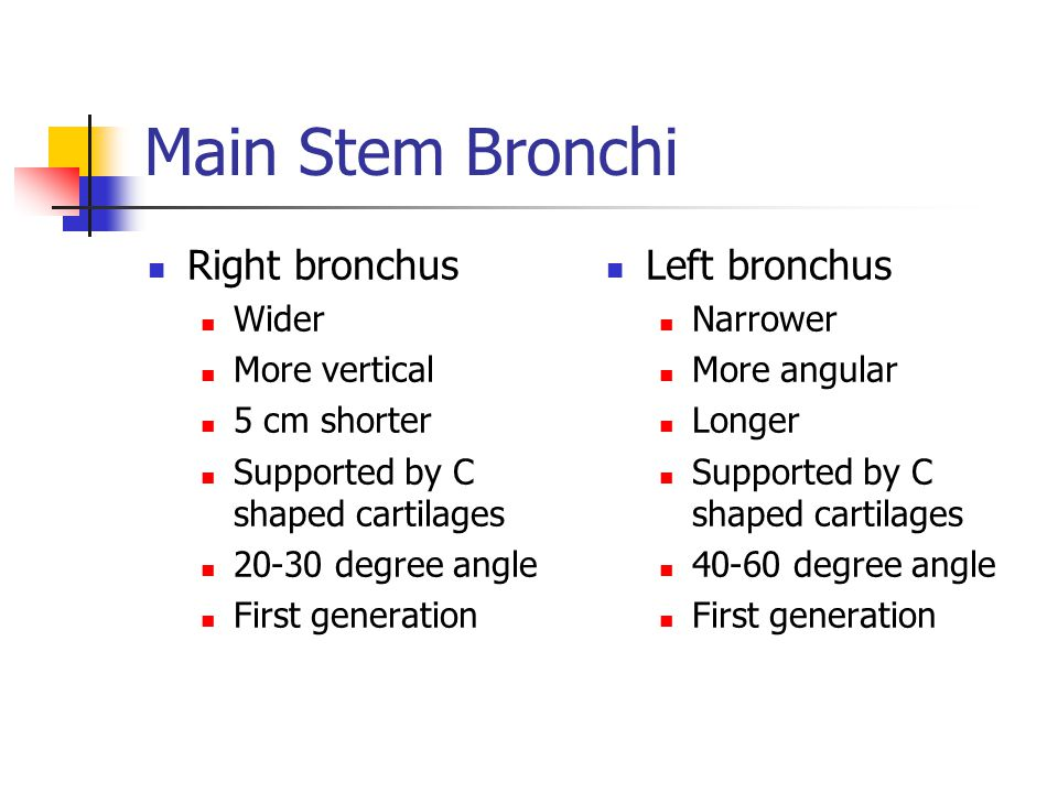 Main Stem Bronchi Right bronchus Left bronchus Wider More vertical