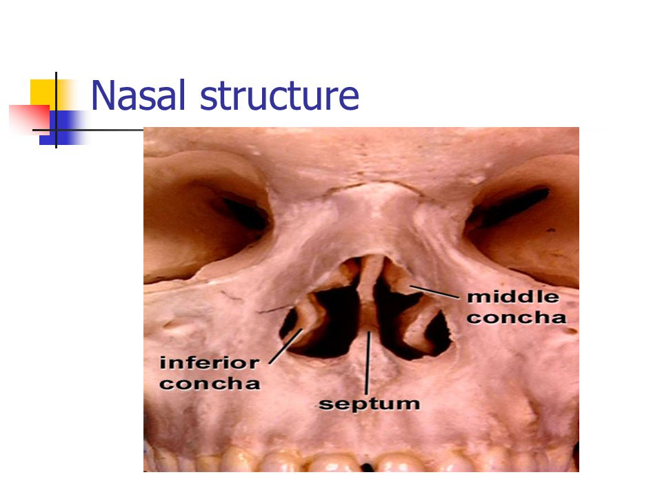 Nasal structure
