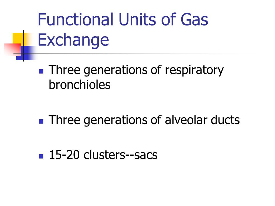 Functional Units of Gas Exchange