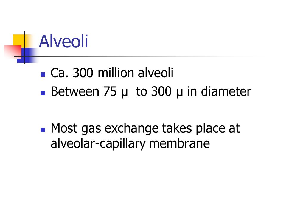 Alveoli Ca. 300 million alveoli Between 75 µ to 300 µ in diameter