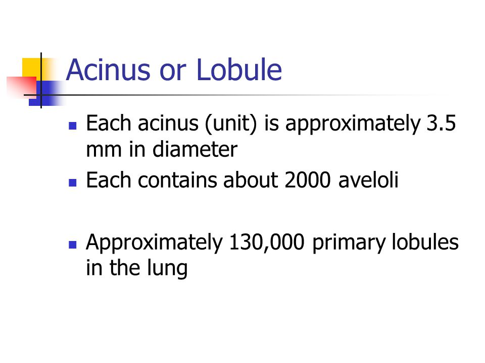 Acinus or Lobule Each acinus (unit) is approximately 3.5 mm in diameter. Each contains about 2000 aveloli.