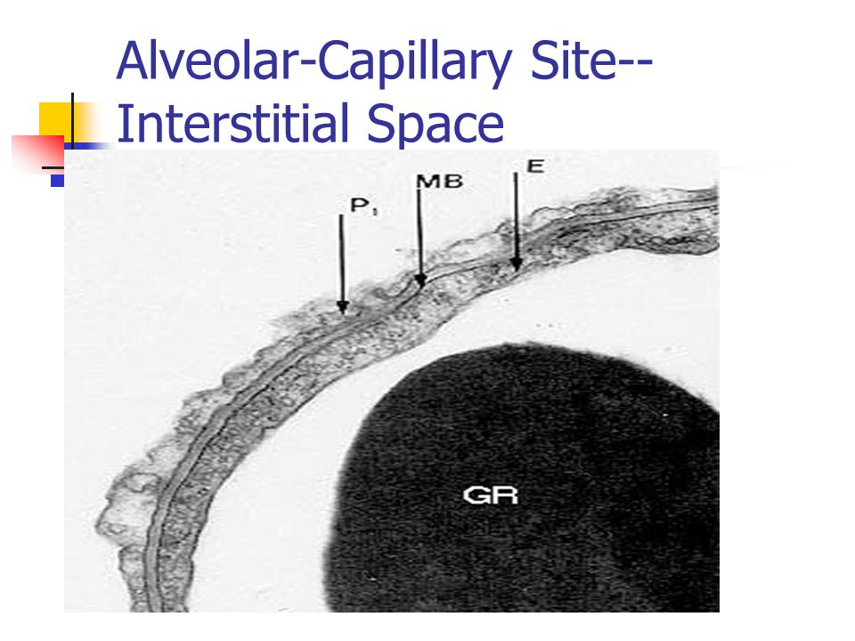 Alveolar-Capillary Site--Interstitial Space