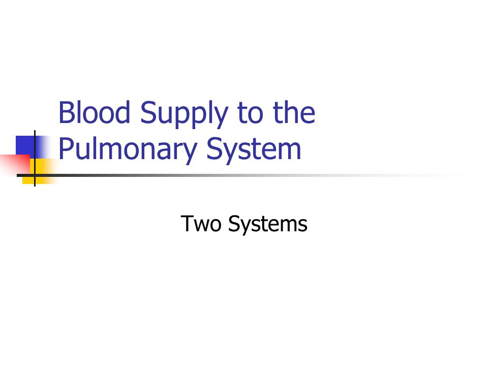 Blood Supply to the Pulmonary System