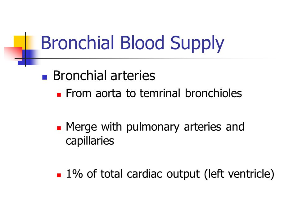 Bronchial Blood Supply