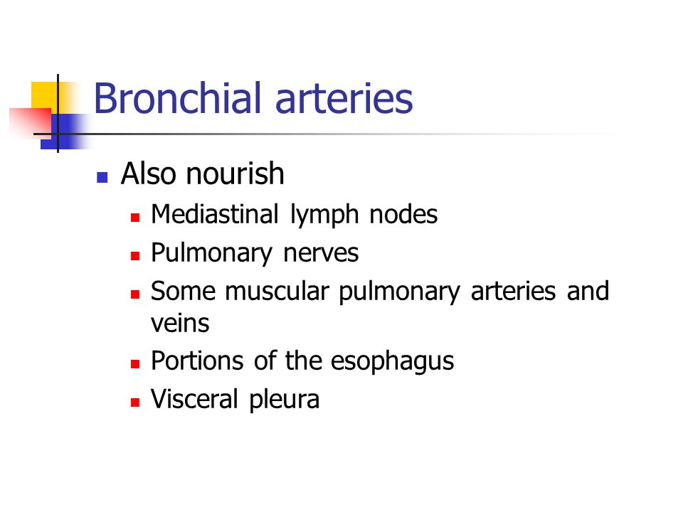 Bronchial arteries Also nourish Mediastinal lymph nodes