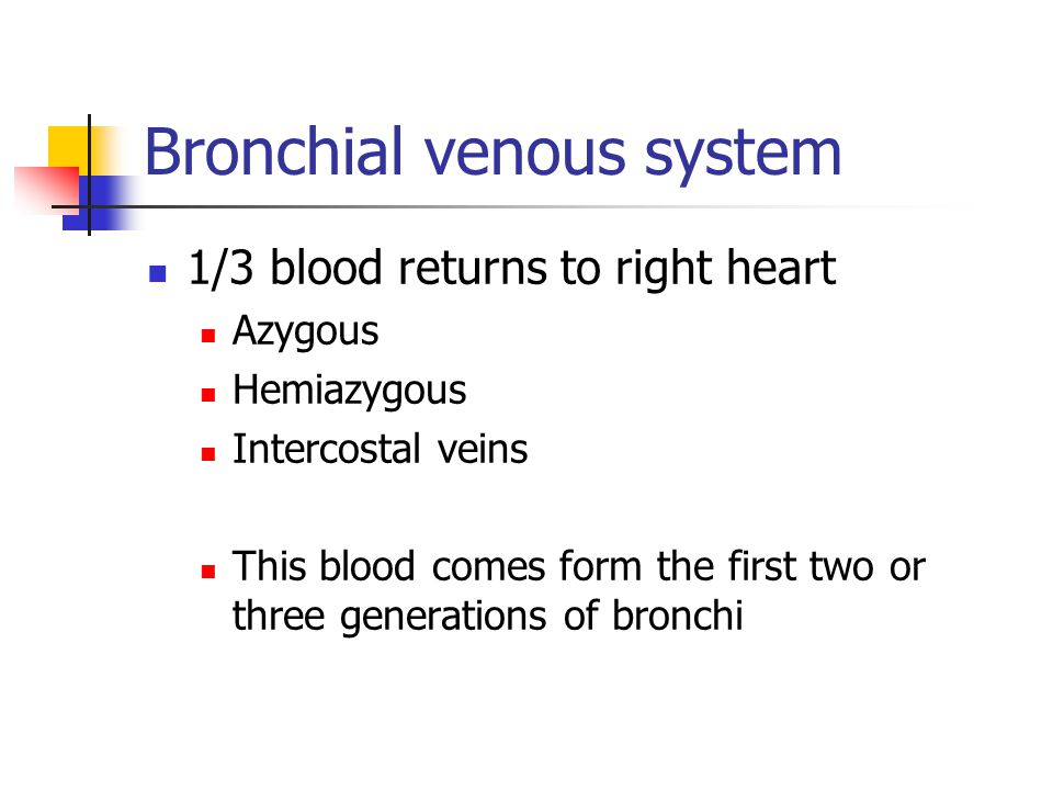 Bronchial venous system