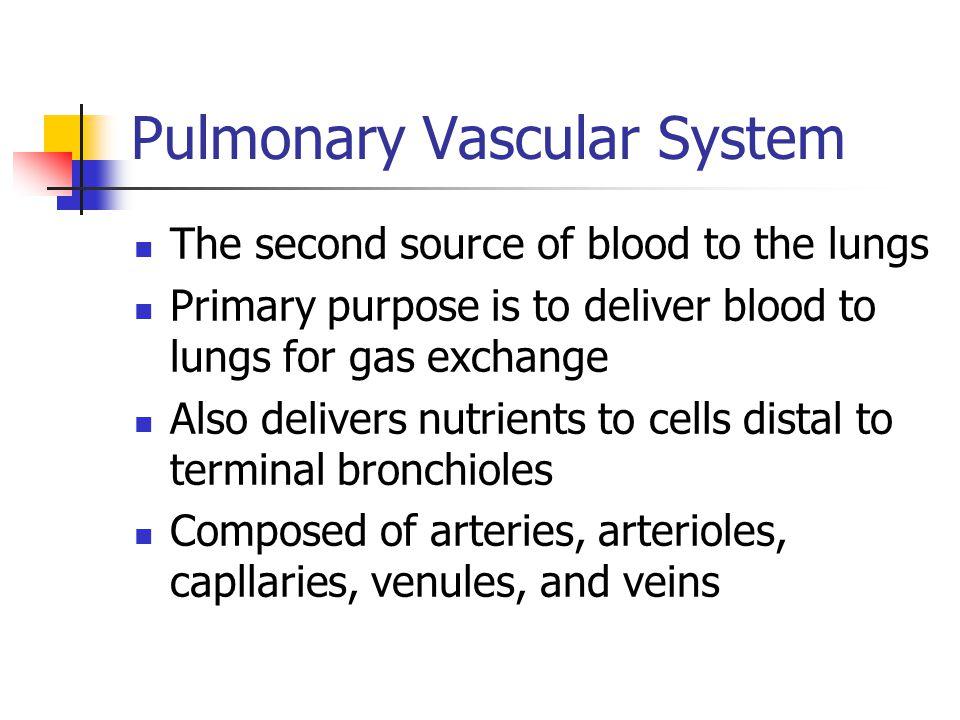 Pulmonary Vascular System