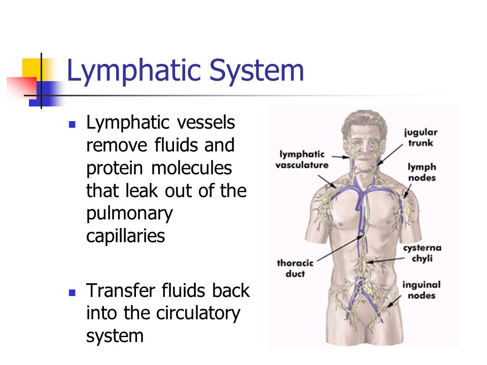 Lymphatic System Lymphatic vessels remove fluids and protein molecules that leak out of the pulmonary capillaries.