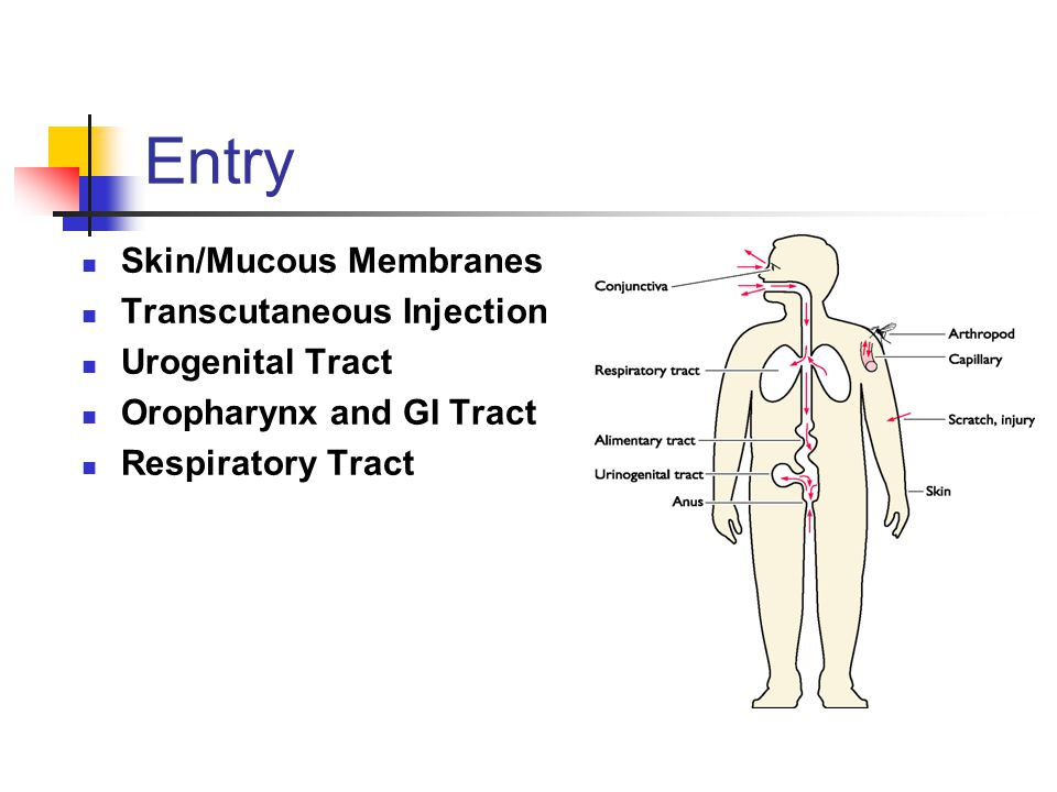 Entry Skin/Mucous Membranes Transcutaneous Injection Urogenital Tract