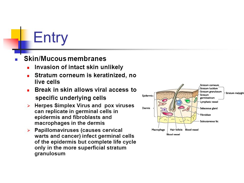 Entry Skin/Mucous membranes Invasion of intact skin unlikely