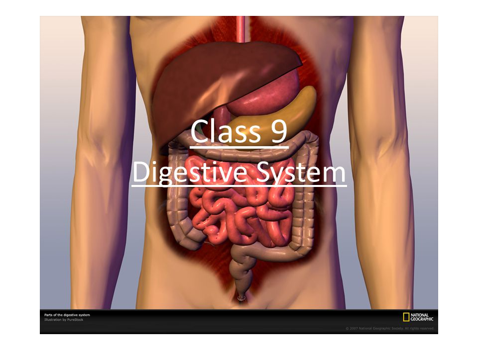 Class 9 Digestive System